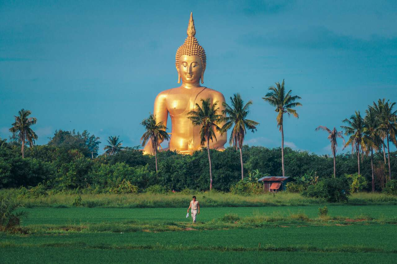 A person walking along the rice paddie with The Great Buddha of Thailand in the background